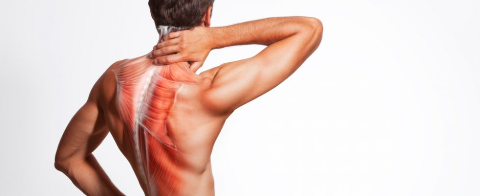 Muscle Soreness from lactic acid and muscle fiber tears