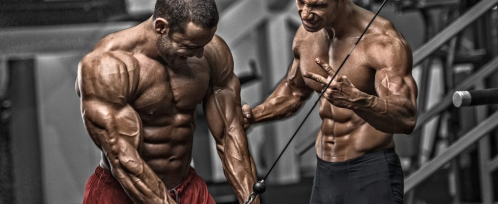 Muscle Building Muscle Toning